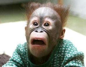 Chimpanzee-Scared-Face-Funny-Image